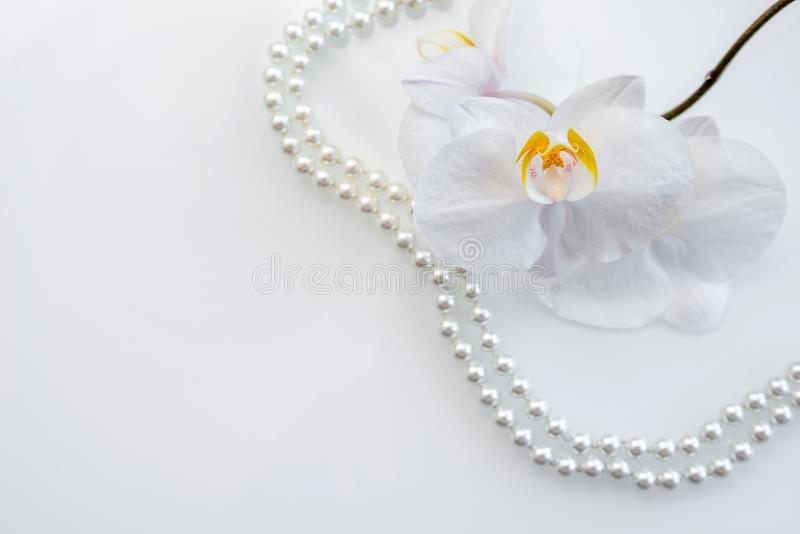 Pearl and white orchid. On a white glas stock photo