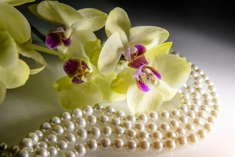 Pearl and yellow orchid. On a white glass royalty free stock image