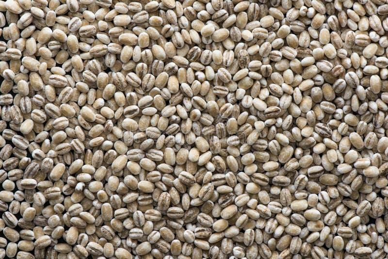 Pearled зерна ячменя стоковые изображения