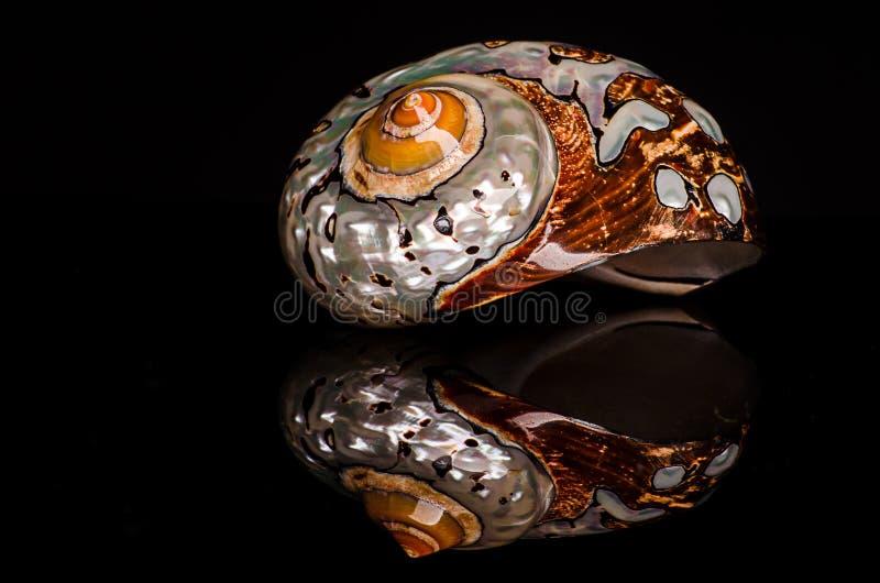 Pearlescent seashell na czarnym tle z odbiciem, fotografia stock