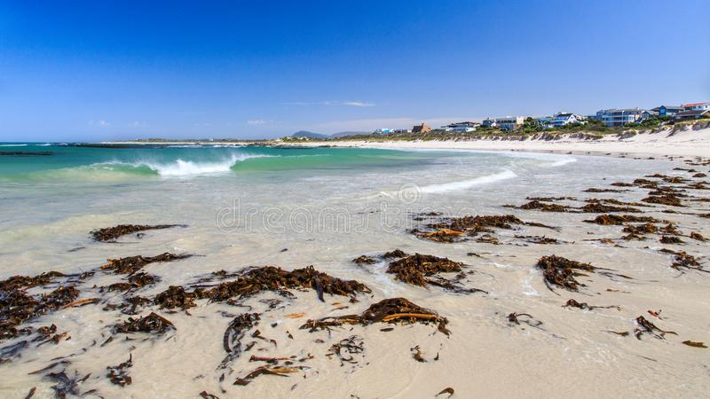 Kelp on the beach - Pearly beach - South Africa. Pearly Beach is a remote seaside hamlet in Overberg District Municipality in the Western Cape Province of South royalty free stock photos