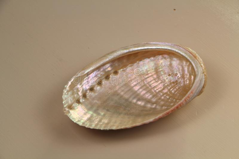 Pearly seashell on a table royalty free stock images