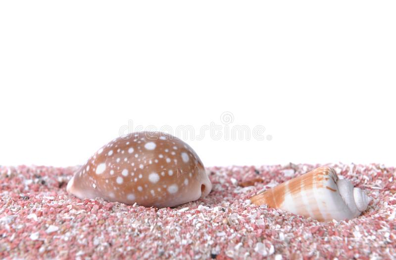 Pearly seashells on pink sand under white background. Pearly seashells on pink sand under white copy space royalty free stock image