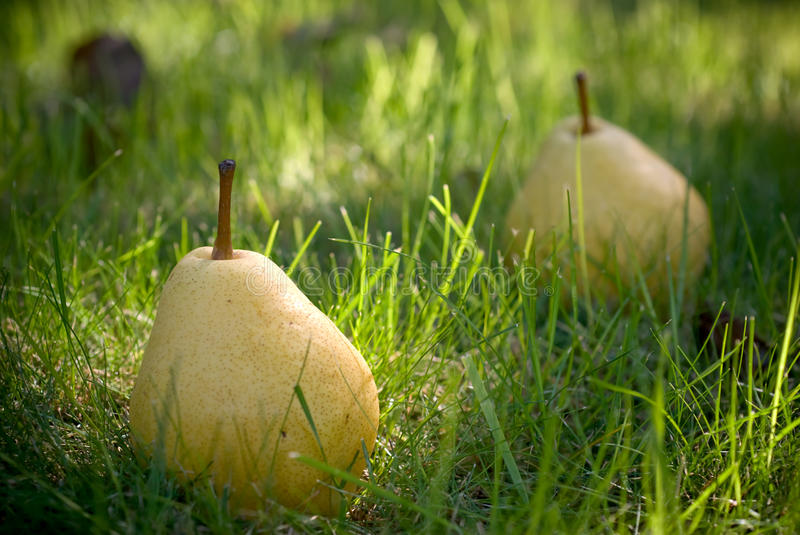 Download Pears stock photo. Image of morning, decoration, autumn - 19195282