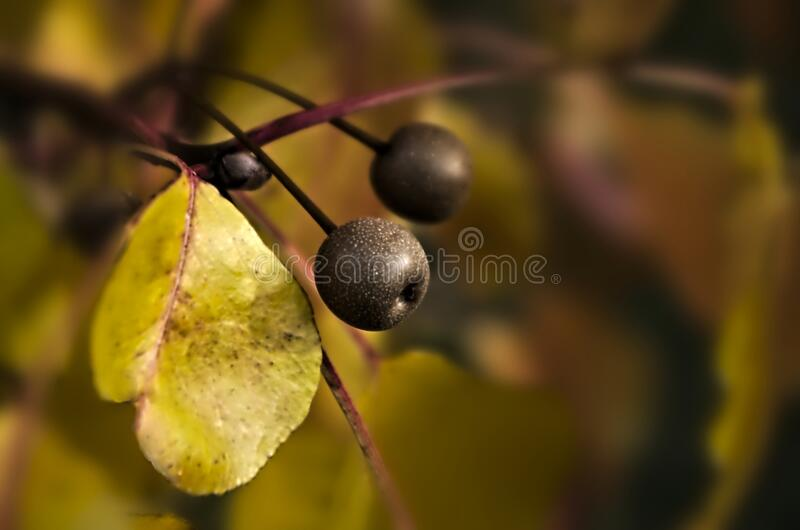 Download Pears in Autumn stock photo. Image of pentaxart, bokeh - 83039658