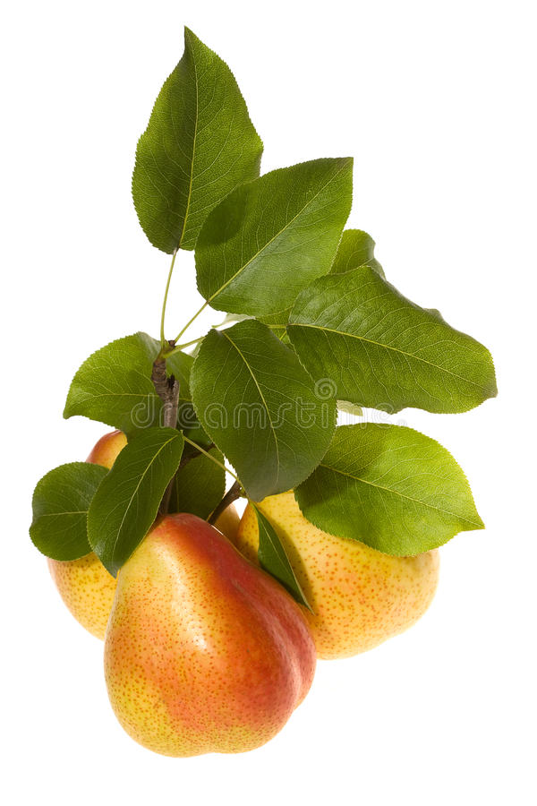 Pears And Green Leafs Stock Image