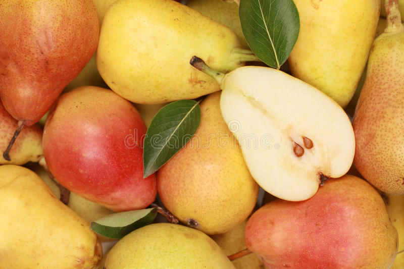 Download Pears with leaves stock photo. Image of leaf, fruit, background - 27670718
