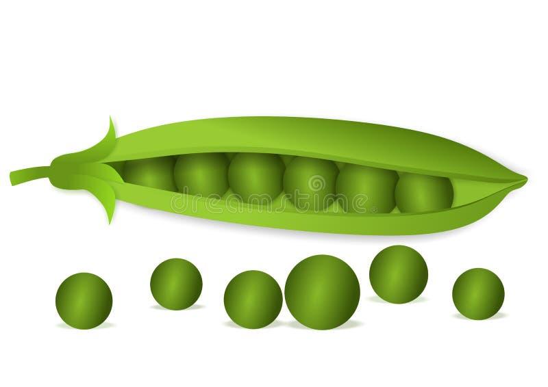 Peas vector illustration
