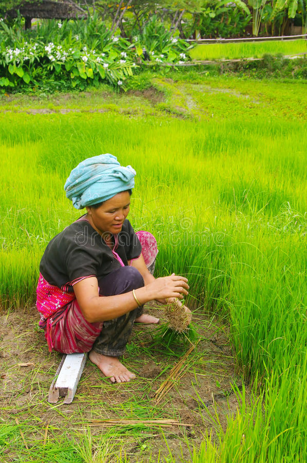 Peasant female in northern Thailand stock photography