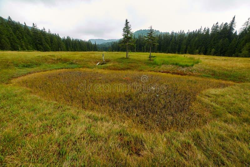 Peat bog in Romania. Peat bog in Apuseni national reserve, Romania royalty free stock photo