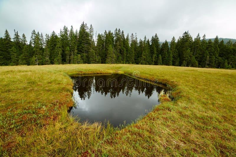 Peat bog in Romania. Peat bog in Apuseni national reserve, Romania royalty free stock image