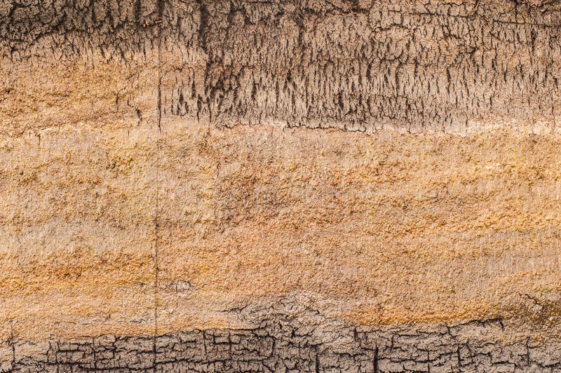 Peat bog earth cross section texture stock photo