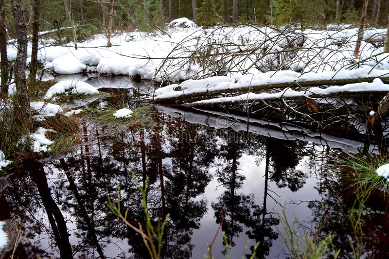 Peat bog, reflection in the water and trees - winter time. Cervene blato, Trebonsko, South Bohemia royalty free stock photos