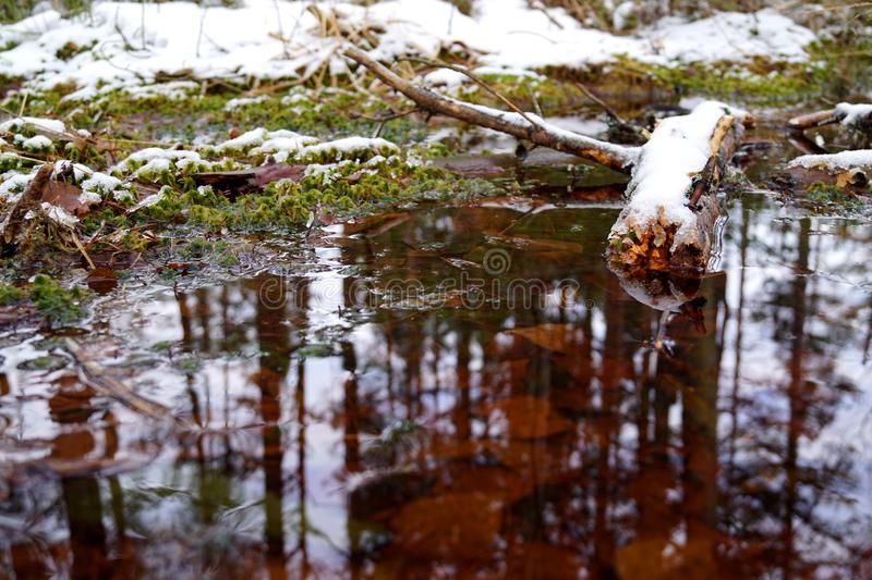 Peat bog, reflection in the water, wood and snow. Cervene blato, Trebonsko, South Bohemia stock photography