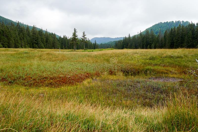 Peat bog in Romania. Peat bog in Apuseni national reserve, Romania royalty free stock photos