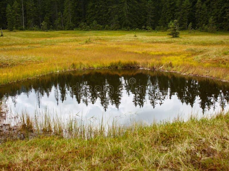 Peat bog in Romania. Peat bog in Apuseni national reserve, Romania stock photos