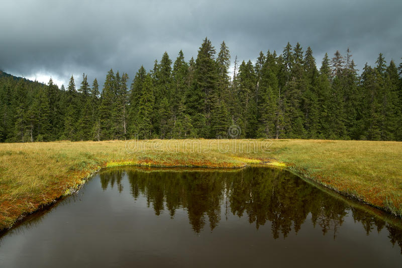 Peat bog in Romania. Peat bog in Apuseni national reserve, Romania stock photography