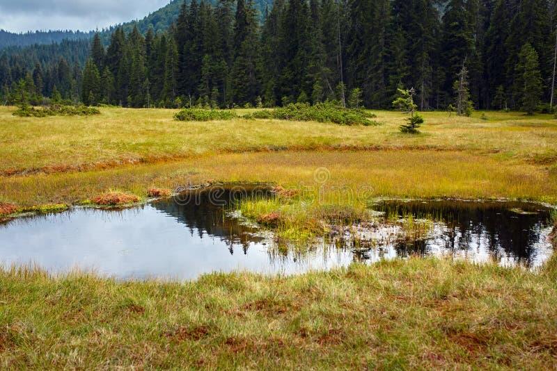 Peat bog in Romania. Peat bog in Apuseni national reserve, Romania royalty free stock photography
