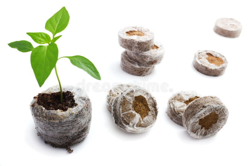 Peat briquettes for growing seedlings royalty free stock photo