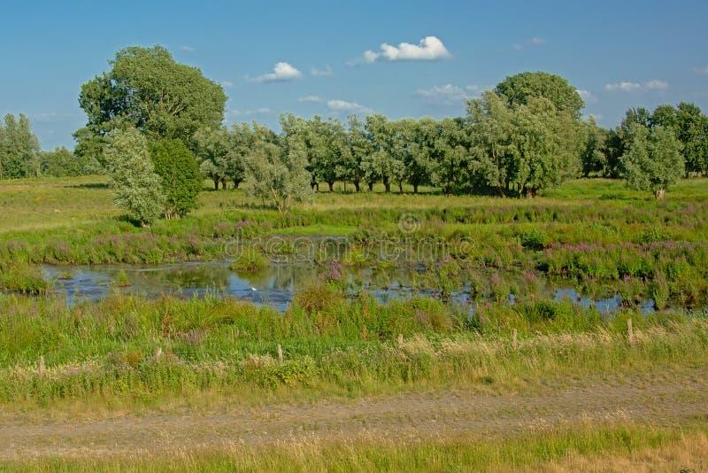 Peat lake in a wetland landscape trees in Kalkense Meersen nature reerve, Flanders, Belgium. PEat lake in a marsh sunny landscape with trees in Kalkense Meersen stock photography