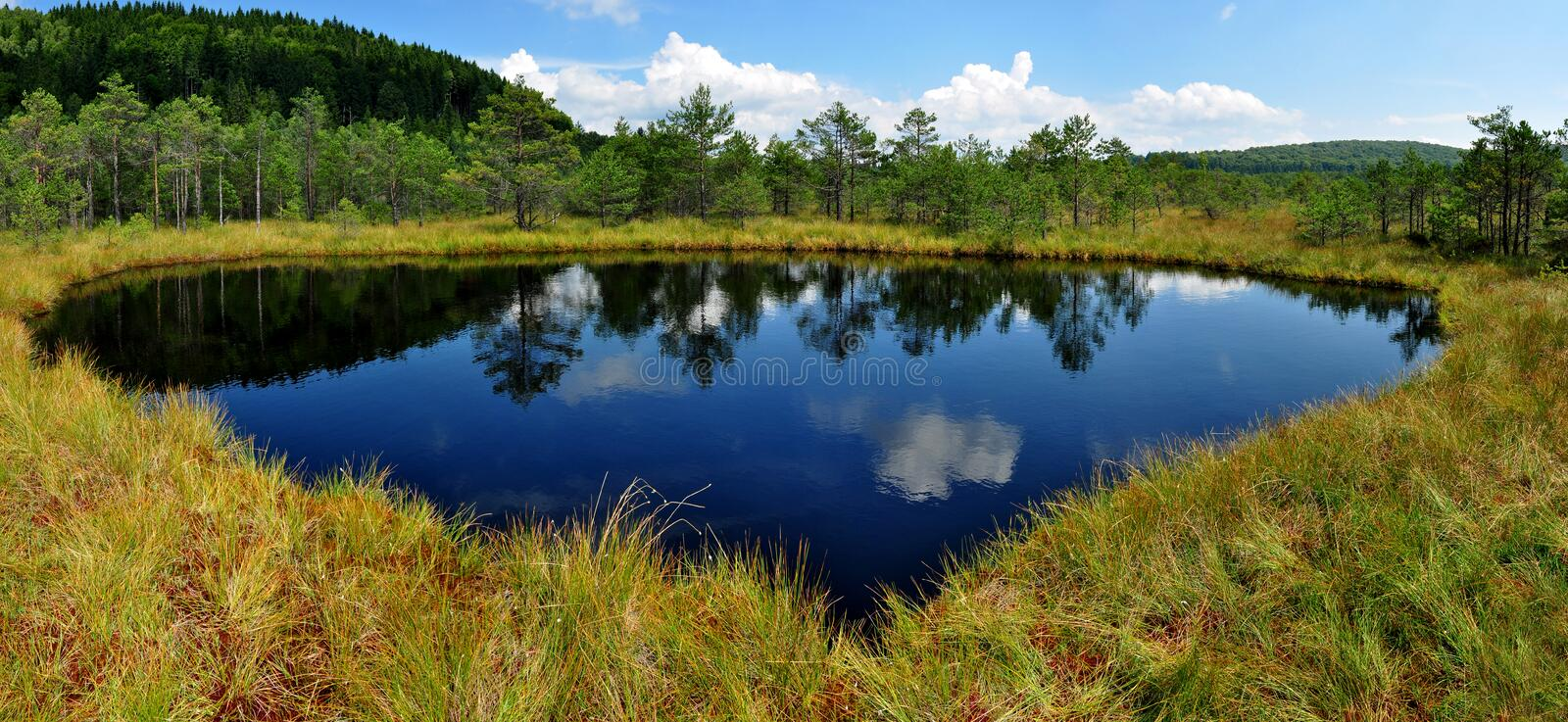 Download Peat moss stock image. Image of landscape, rare, fauna - 28639407
