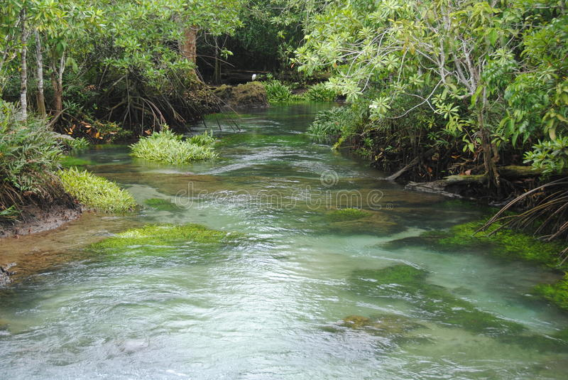 Peat swamp forest stock photos