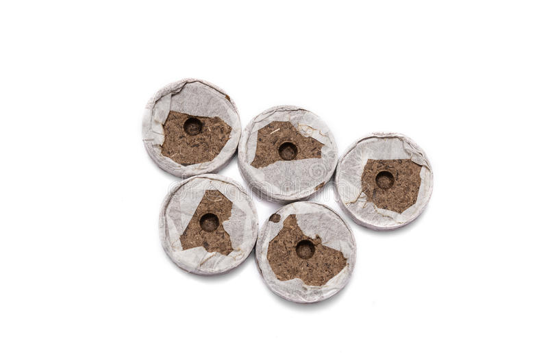 Peat tablets for seedlings stock photo