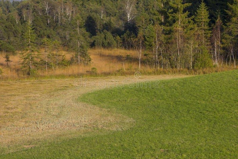 Peatland com a pastagem da grama alaranjada e do pântano fotografia de stock