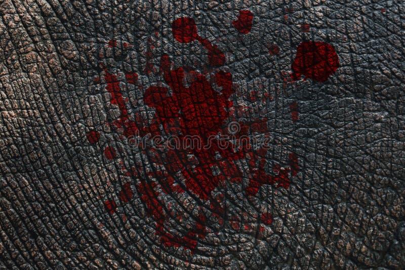 Peau d'éléphant avec le sang photographie stock libre de droits