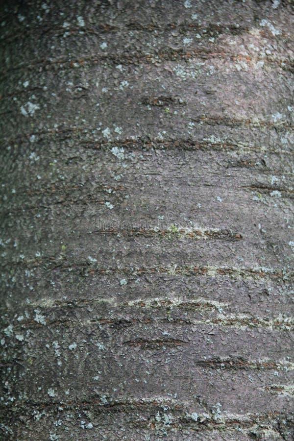 Peau d'arbre images stock