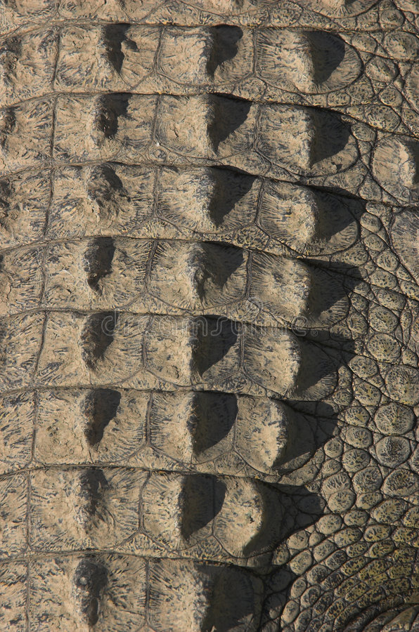 Peau d'arrière de crocodile photo libre de droits