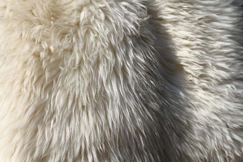 Peau d'ours blanc photographie stock libre de droits