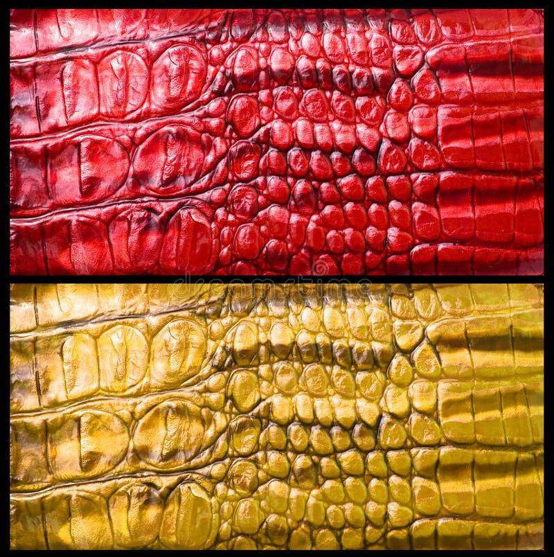 Peau de crocodile photo stock