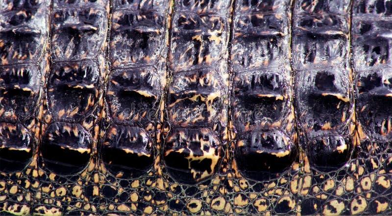 Peau de crocodile images libres de droits