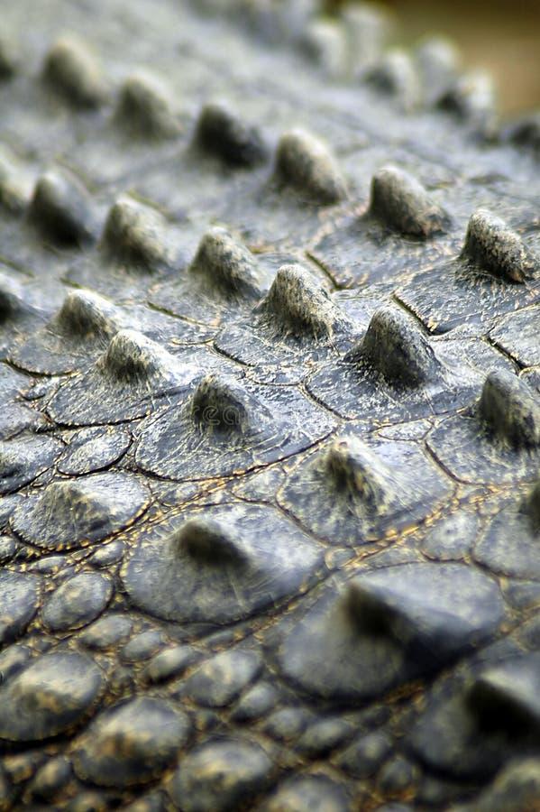 Peau de crocodile image stock