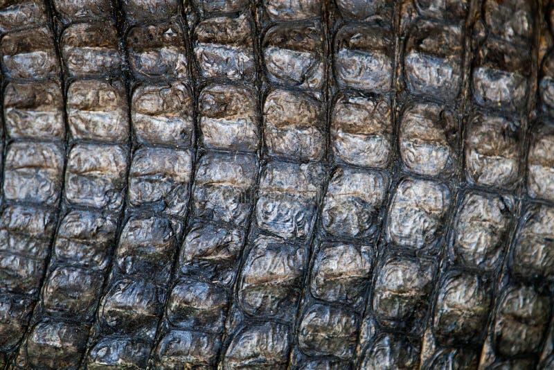 Peau de crocodile photo libre de droits