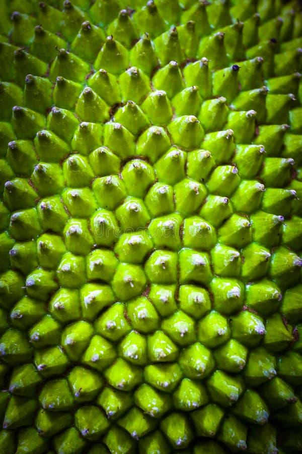 Peau de jacquier un vert jaunâtre consécutif de petit bouton photographie stock libre de droits