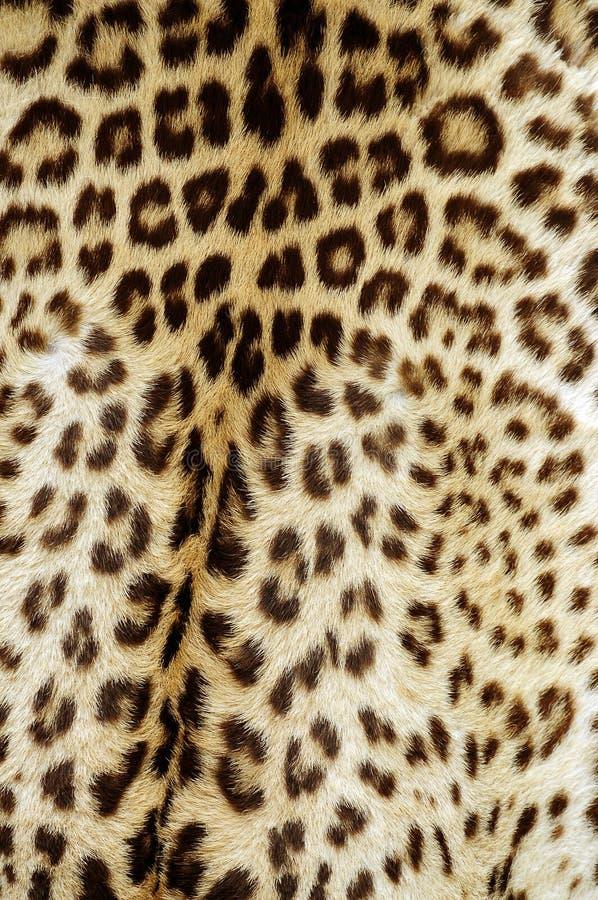 Peau de léopard