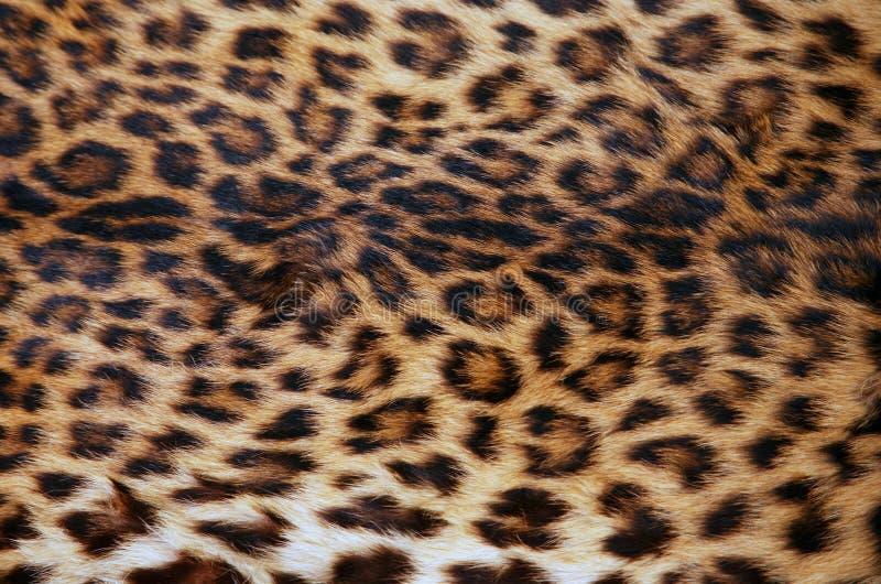 peau de léopard photographie stock libre de droits