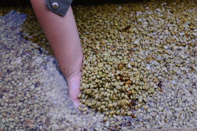 Peau de nettoyage organique produite de grain de café d'ensemble industriel photographie stock libre de droits