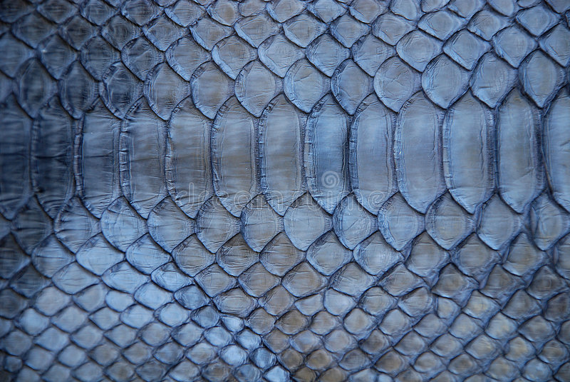 Peau de serpent bleue photos stock
