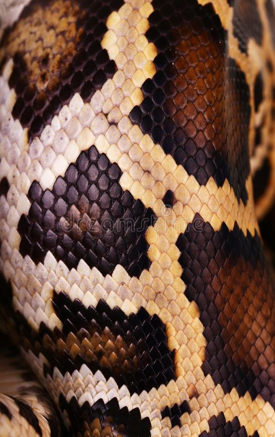 peau de serpent de python et modèle d'échelles image libre de droits