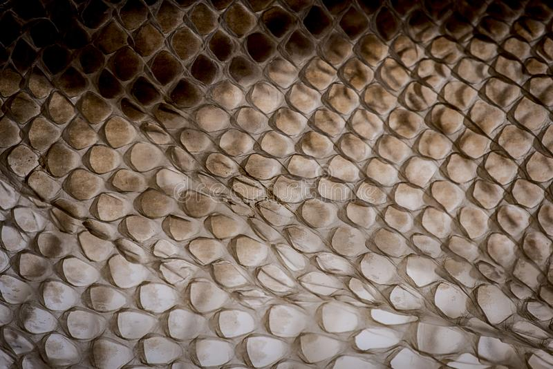 Peau de serpent - texture image libre de droits