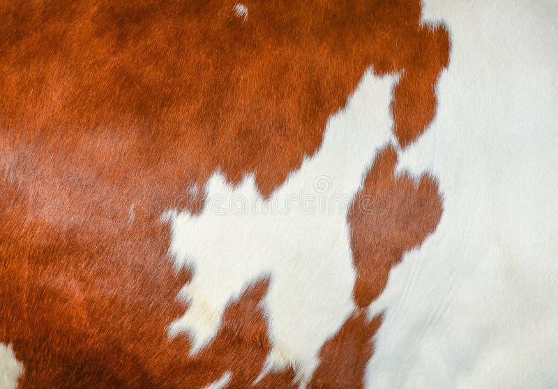 Peau de vache étroite photo libre de droits