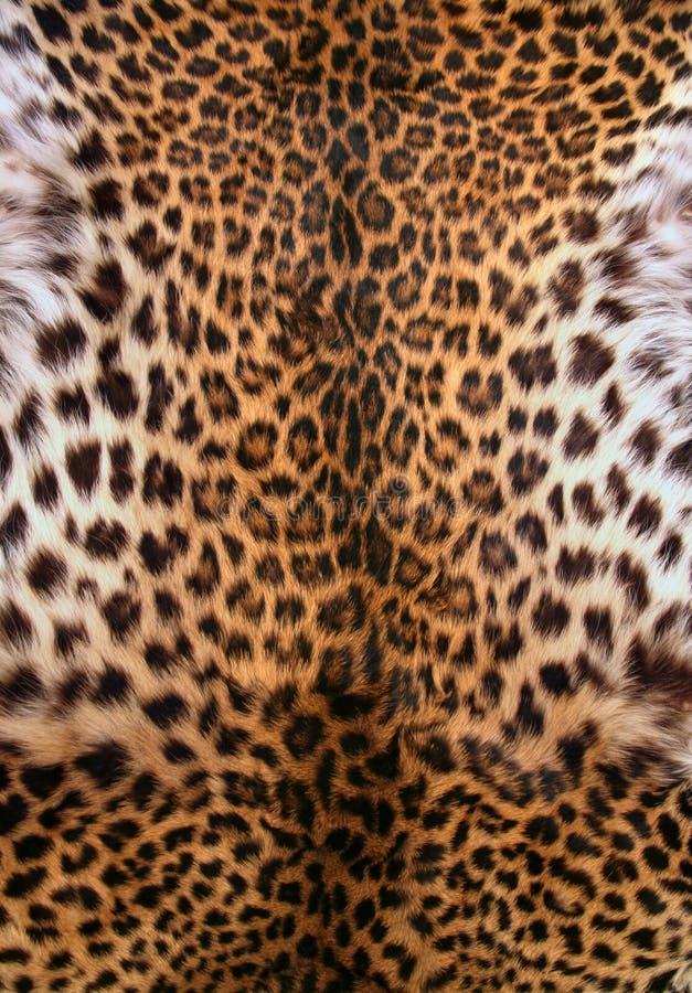 Peau du léopard photo libre de droits