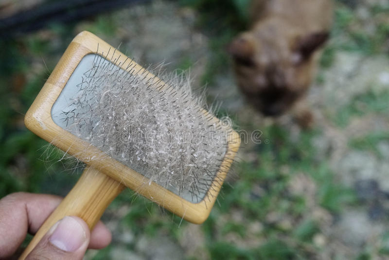 Peau et cheveux de chat sur la brosse après le toilettage photographie stock