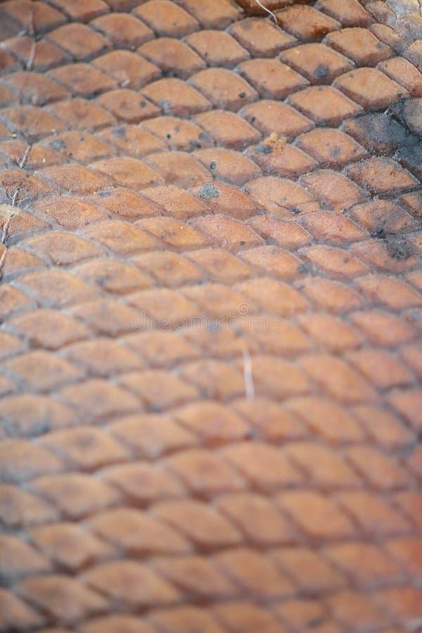 Peau, poisson, belle couleur, fond, texture photo libre de droits