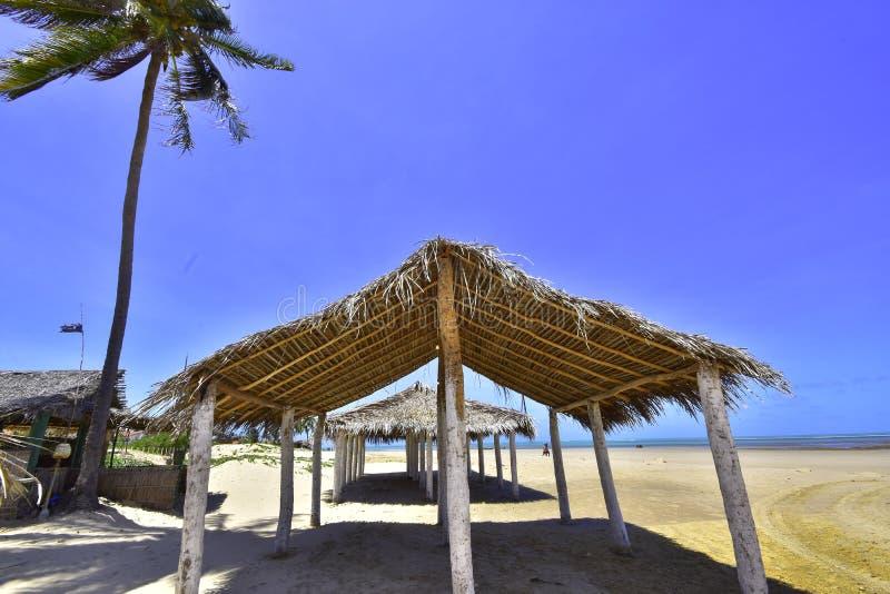 Peba-Strand brasilien lizenzfreies stockbild