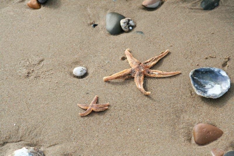 Pebbels e seastar na areia da praia foto de stock