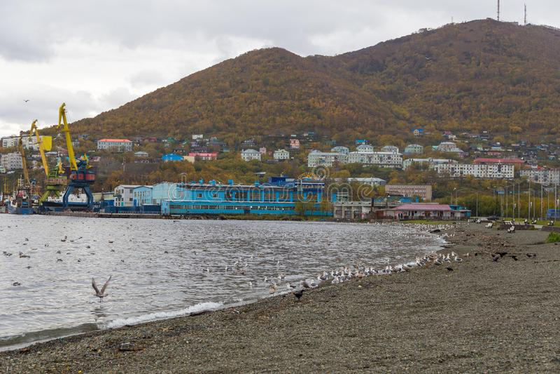 Pebble海滩的看法阿瓦查湾的,堪察加彼得罗巴甫洛夫斯克,俄罗斯 库存图片